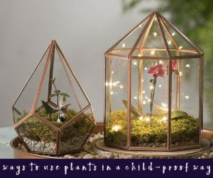 5 Ways to Use Plants in a Child-proof Way