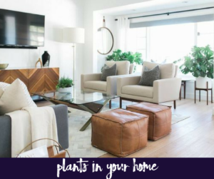 Why You should Always have Plants in Your Home