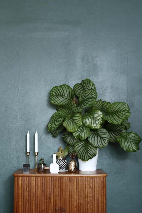 why-you-should-always-have-plants-in-your-home-bungalow5-dk
