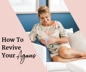 How To Revive Your Agaves